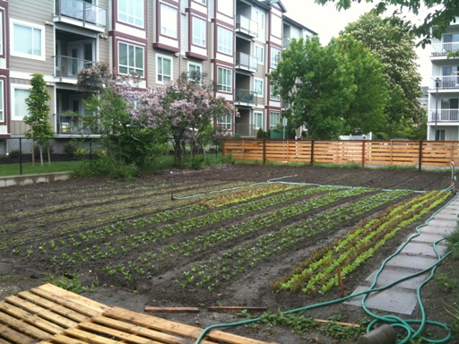 Green City Acres in Kelowna, run by Curtis Stone.